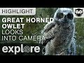 Download Great Horned Owlet Investigates the Explore Live Cam - Live Cam Highlight Video