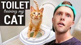 Download Toilet Training My Cat! Video