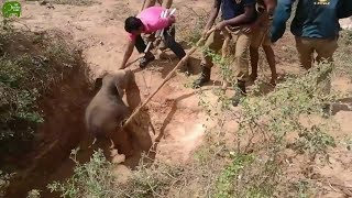 Download Angriest baby elephant gets saved from a deadly pit. People are awesome Video