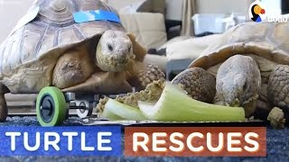 Download World Turtle Day 2017 | Turtle Rescue Compilation | The Dodo Daily Video