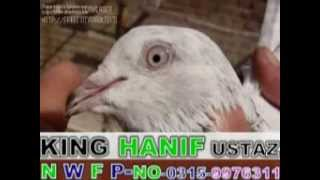 Download KING HANIF IQBAL USTAZ KABOOTAR BAZ,N W F P Nowshera,No.0315-9976311 Video