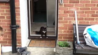 Download Cats go outside for the first time in a cat safe garden Video