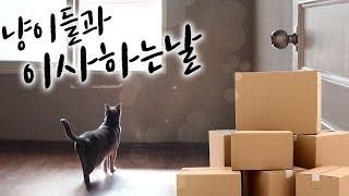 Download 고양이들과 함께 새 집으로 이사하기 (Feat.지옥의 3중창) Video