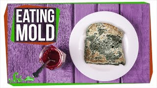 Download What Happens If You Eat Mold? Video