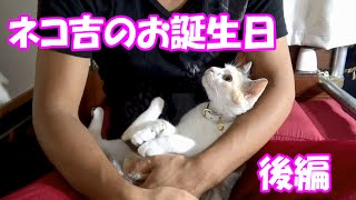Download 捨て猫のネコ吉、保護から1年のお誕生日【後編】1 year from the protection Neko-Cat's birthday [final part] Video