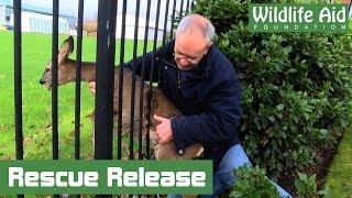 Download Wildlife Rescue - Feisty Deer Stuck Fast in Fence Video