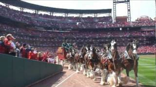 Download Alex meets the famous Budweiser Clydesdales as part of World Wish Day on April 29, 2011 Video