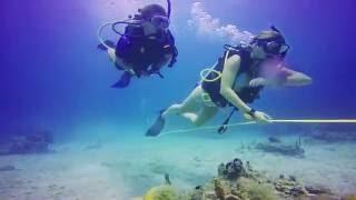 Download Broadreach Marine Science Programs Video
