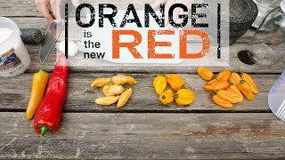 Download Fermented Hot Sauce: Orange is the new Red Video