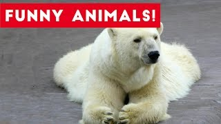 Download Funniest Pet Clips, Bloopers & Moments Compilation of 2017 | Funny Pet Videos Video