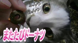 Download ネコ生初のマタタビ系オヤツ Video