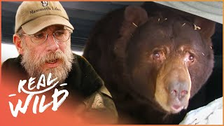 Download They're Huge And Hungry! The Bears Are Back In Town! | The Bear Whisperer | Wild Things Documentary Video