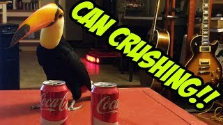 Download Toucan vs. 2 Cans (CAN CRUSHING!) Video