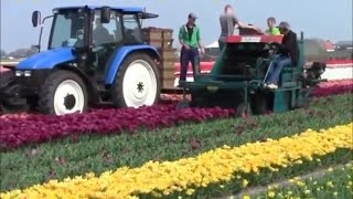 Download Awesome flower machine - new heavy technology machine - best agricultural farming Video
