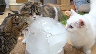 Download 고양이에게 대왕 얼음을 줘봤다 Video