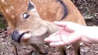 Download I PROMISE that YOU will get A LAUHG ATTACK - FUNNY ANIMAL compilation Video