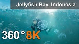 Download 360 video, Jellyfish Bay, Raja Ampat, Indonesia, 8K underwater video Video