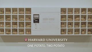 Download One potato, two potato: Contemporary work at Harvard Art Museums Video