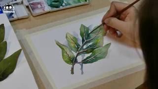 Download [WATERCOLOR TUT] Hướng Dẫn Vẽ Màu Nước (Số thứ 1): Vẽ Chiếc Lá [Màu Nước Mỗi Ngày] Video