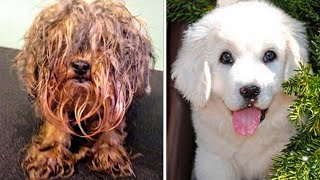 Download 15 UNBELIEVABLE dog transformations BEFORE and AFTER rescue Video