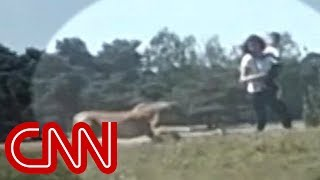 Download Family chased by cheetahs in safari park Video