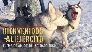 Download ¡Bienvenidos al Ejército! - El Husky, el mejor amigo del soldado ruso Video