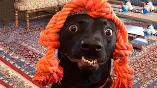 Download 🤣 Funniest 🐶 Dogs And 😻Cats - Funny Pet Animals' Life 😇 Video