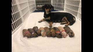 Download Rescued mom and babies are getting ready for their forever families| The Dodo Project Home LIVE Video