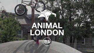 Download Animal London - DIG BMX Video