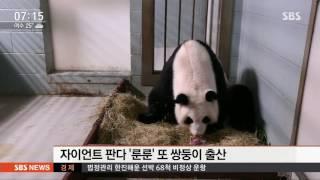 Download 갓 태어난 쌍둥이 자이언트 판다…출산 장면 공개 / SBS Video