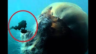 Download Biggest Sea Creatures in the WORLD Video