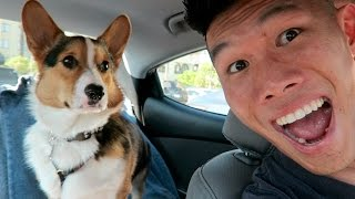 Download TAKING MY CORGI ON THE ROAD - Life After College: Ep. 427 Video