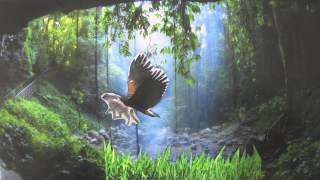 Download Forest Ecosystem - Stop-motion Movie Video