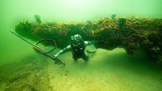 Download Searching For Giant Fish Under Coral Caves!! (Spearfishing) Video