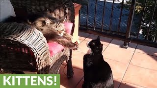 Download Rude kitty attacks sleeping cat for no apparent reason Video