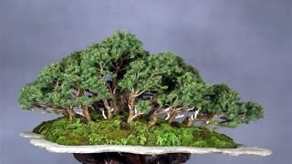 Download Creating a Forest Bonsai Video