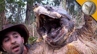 Download The BIGGEST Turtle You've EVER seen! Video