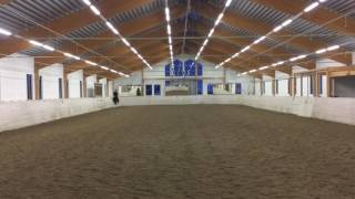 Download Dressage horse - for sale Video