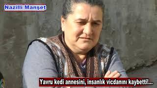 Download Yavru kedi annesini, insanlık vicdanını kaybetti Video