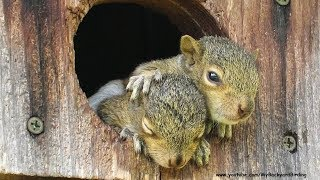 Download Orphaned Baby Squirrels Rescued - A Documentary Video