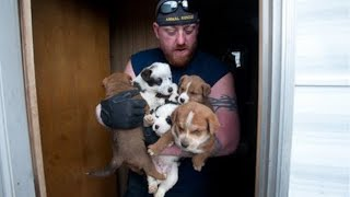 Download Animal Rescue Team Rescues Hundreds Video