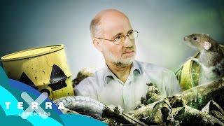 Download Wohin mit dem Atommüll? | Harald Lesch Video