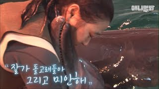 Download 20년 만에 바다로 간 돌고래가 사육사에게 돌아온 이유.. Video