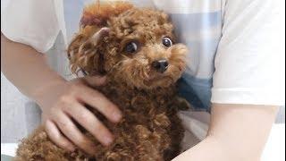 Download 뭐라하는지 다 알아듣는 강아지 Video