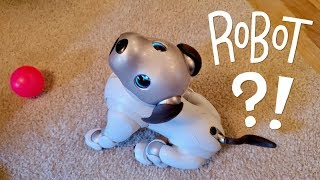 Download Our New Dog, AIBO: Pet Replacement Robot?! Video