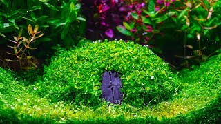 Download Planted Aquarium | How to Create | Hobbit House Video
