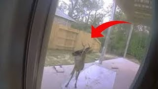 Download Deer Tries To Show Family Something In Backyard – When They See It, They Call 911 Video