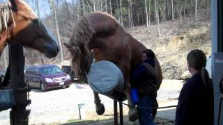 Download I helped my uncle jack off a horse... (punctuation matters) Video