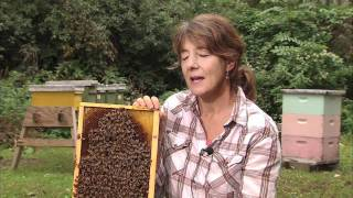 Download Entomologist Marla Spivak: 2010 MacArthur Fellow | MacArthur Foundation Video