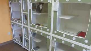 Download CATS (11) for ADOPTION @ North Platte Animal Shelter ~ 2-10-2014 Video